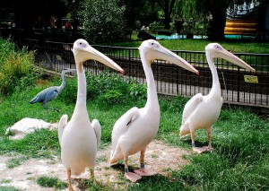 London Zoo 22