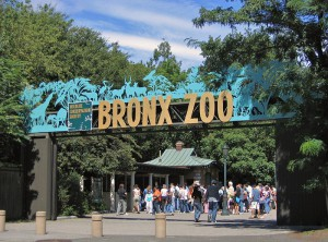 Zoo i New York 1