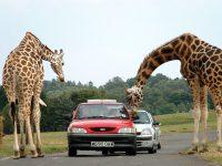 Olyckor på zoo